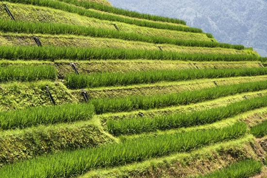 philippe-hugonnard-china-10mkm2-collection-rice-terraces-longsheng-ping-an-guangxi