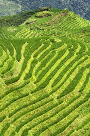 philippe-hugonnard-china-10mkm2-collection-rice-terraces-longsheng-ping-an-guangxi