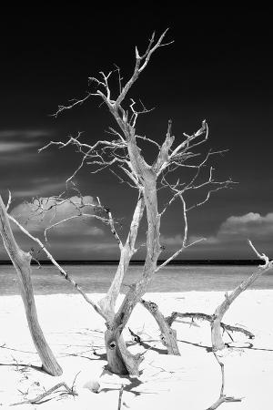 philippe-hugonnard-cuba-fuerte-collection-b-w-trees-and-white-sand-vi