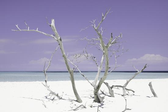 philippe-hugonnard-cuba-fuerte-collection-purple-stillness