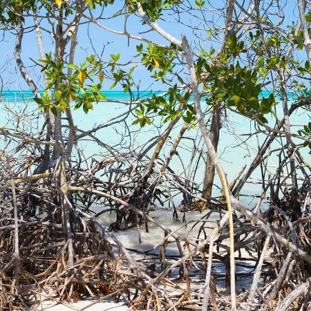 philippe-hugonnard-cuba-fuerte-collection-sq-mangroves