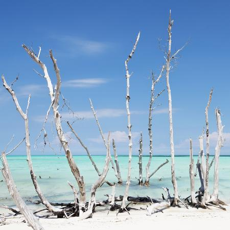 philippe-hugonnard-cuba-fuerte-collection-sq-white-water-tree-forest