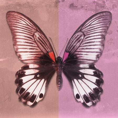 philippe-hugonnard-miss-butterfly-agenor-sq-red-pale-violet