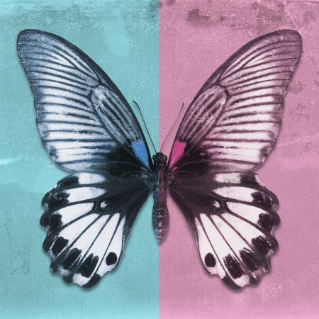 philippe-hugonnard-miss-butterfly-agenor-sq-turquoise-pale-violet