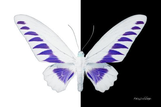 philippe-hugonnard-miss-butterfly-brookiana-x-ray-b-w-edition