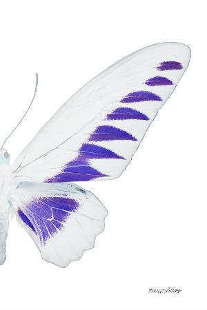 philippe-hugonnard-miss-butterfly-brookiana-x-ray-right-white-edition