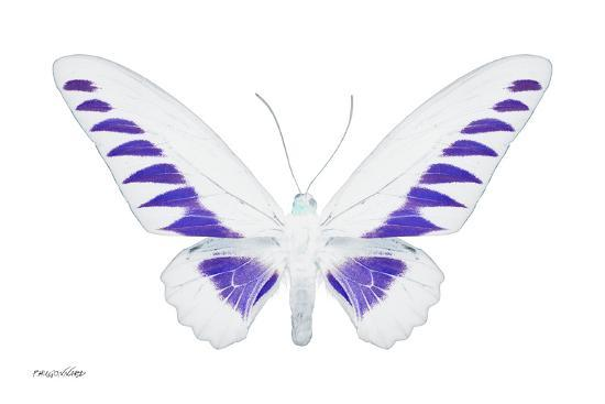 philippe-hugonnard-miss-butterfly-brookiana-x-ray-white-edition