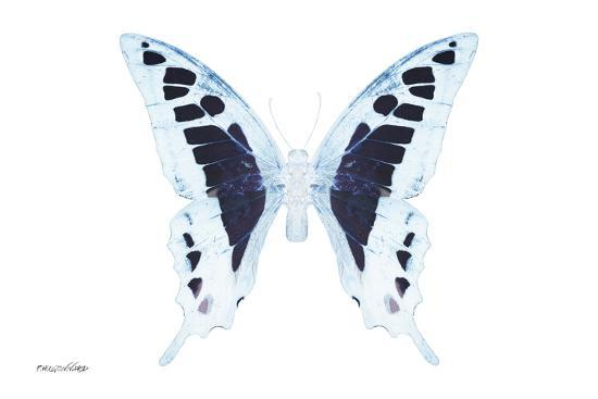 philippe-hugonnard-miss-butterfly-cloanthus-x-ray-white-edition