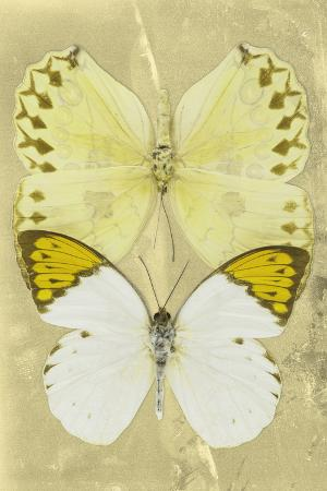 philippe-hugonnard-miss-butterfly-duo-formoia-ii-yellow
