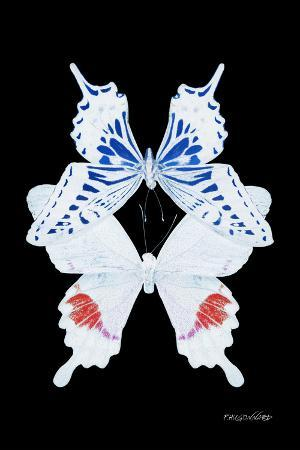 philippe-hugonnard-miss-butterfly-duo-parisuthus-ii-x-ray-black-edition