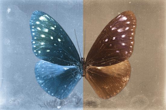 philippe-hugonnard-miss-butterfly-euploea-blue-caramel