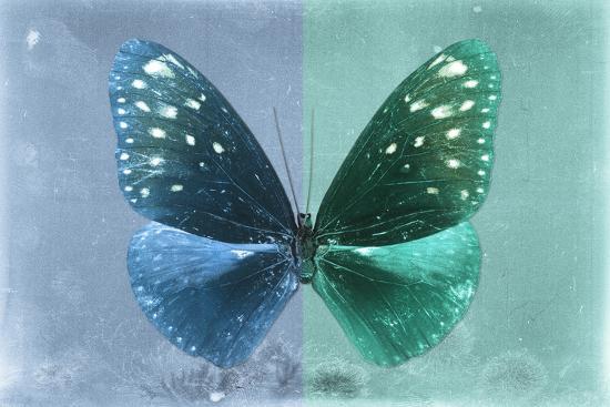 philippe-hugonnard-miss-butterfly-euploea-blue-coral-green