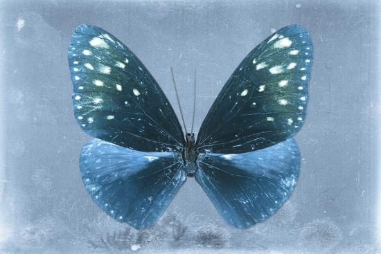 philippe-hugonnard-miss-butterfly-euploea-blue