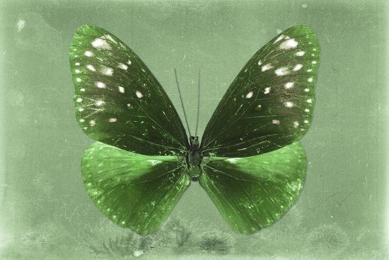 philippe-hugonnard-miss-butterfly-euploea-green