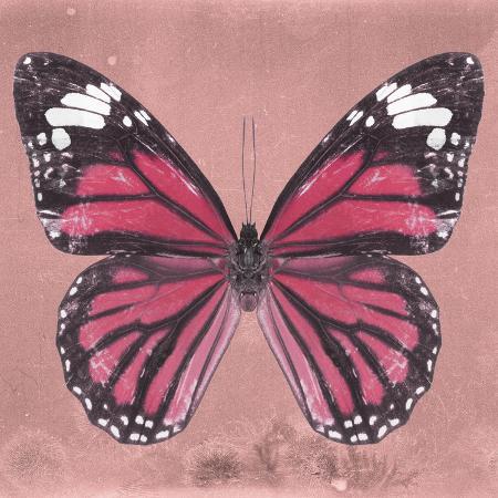 philippe-hugonnard-miss-butterfly-genutia-sq-hot-pink