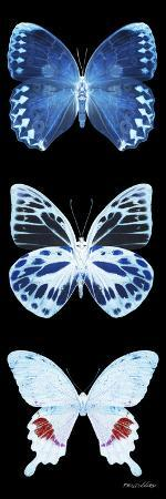 philippe-hugonnard-miss-butterfly-x-ray-black-pano-ii