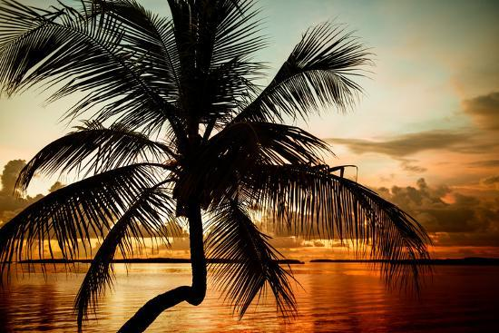 philippe-hugonnard-palm-tree-at-sunset-florida