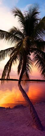 philippe-hugonnard-palm-tree-at-sunset-florida