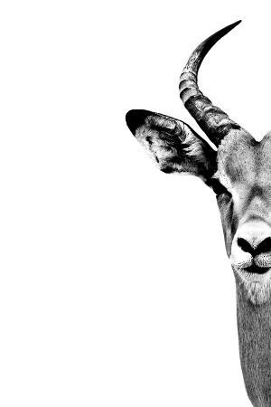 philippe-hugonnard-safari-profile-collection-antelope-face-white-edition