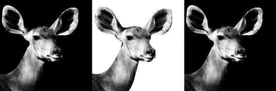 philippe-hugonnard-safari-profile-collection-antelopes-impalas-portraits-iv