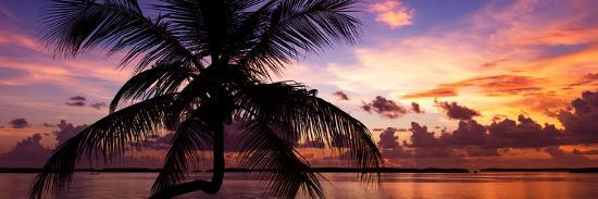 philippe-hugonnard-silhouette-of-palm-tree-at-sunset