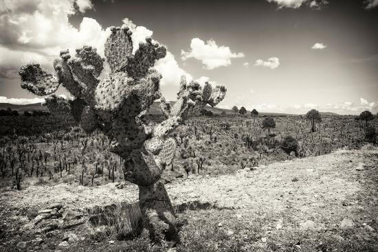philippe-hugonnard-viva-mexico-b-w-collection-cactus-in-the-mexican-desert-iii