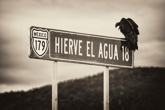 philippe-hugonnard-viva-mexico-b-w-collection-vulture
