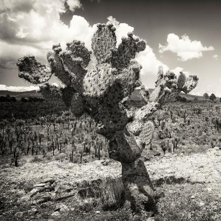 philippe-hugonnard-viva-mexico-square-collection-cactus-desert