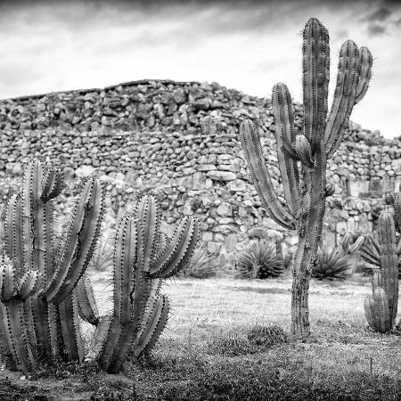 philippe-hugonnard-viva-mexico-square-collection-mexican-cactus-iii