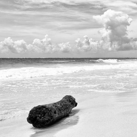 philippe-hugonnard-viva-mexico-square-collection-tree-trunk-on-a-caribbean-beach-ii