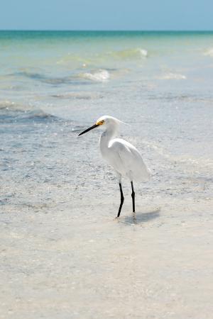 philippe-hugonnard-white-heron-florida