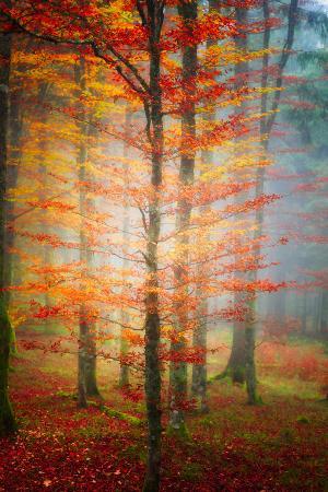 philippe-sainte-laudy-autumn-s-end
