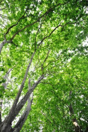philippe-sainte-laudy-green-on-air