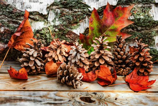 philippe-sainte-laudy-pine-cones-for-fall