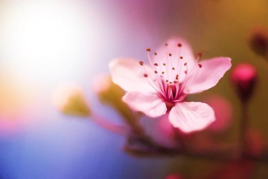 philippe-sainte-laudy-spring-light