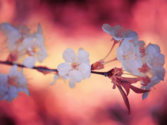 philippe-sainte-laudy-spring-time-2