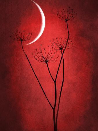 philippe-sainte-laudy-under-the-moon-2