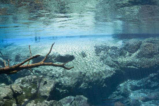 phojo-frog-cypress-springs-underwater-scenic
