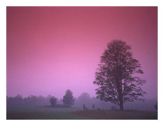 photoinc-studio-evening-fields