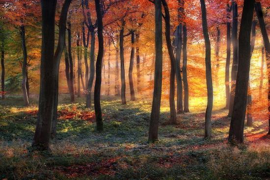 photokes-autumn-woodland-sunrise