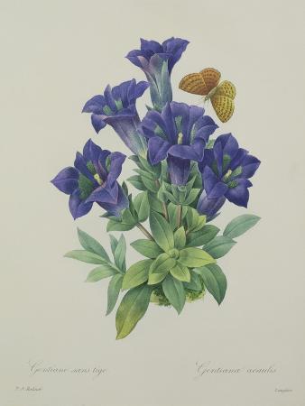 pierre-joseph-redoute-gentiana-acaulis-trumpet-gentian-engraved-by-langlois-from-choix-des-plus-belles-fleurs-1827