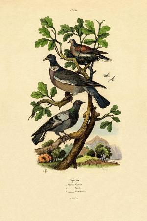 pigeons-1833-39