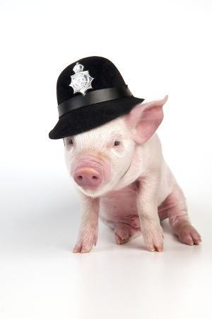 piglet-sitting-wearing-a-police-hat