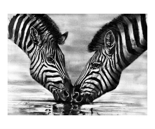 pius-t-kamau-burchell-s-zebra-kenya