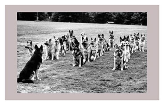 police-dogs-on-parade