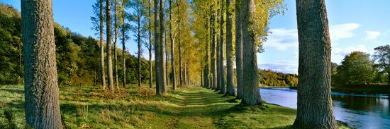 poplar-treelined-at-the-riverside-river-tweed-maxton-newtown-st-boswells-scotland