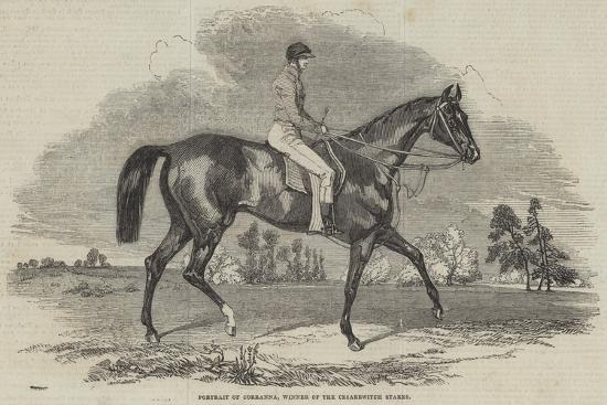 portrait-of-corranna-winner-of-the-cesarewitch-stakes