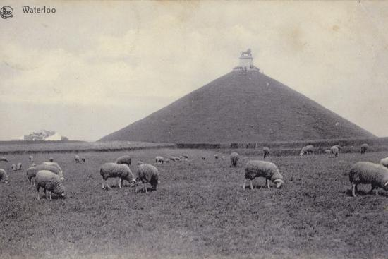 postcard-depicting-sheep-grazing-in-the-fields-of-waterloo