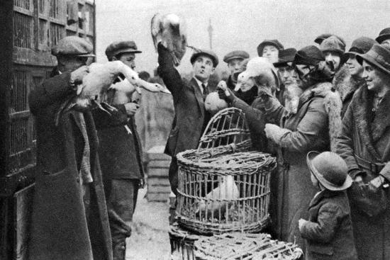poultry-merchants-caledonian-market-london-1926-1927