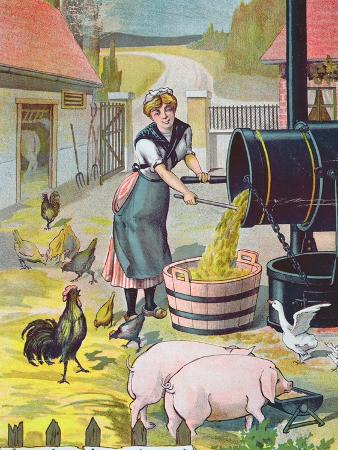 preparing-food-for-the-animals-in-the-farmyard